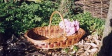 Flower Picking Baskets