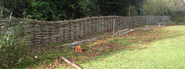 Hazel Fencing